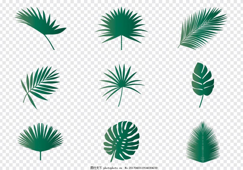 手绘棕榈叶子 手绘叶子 手绘树叶 矢量素材 手绘植物