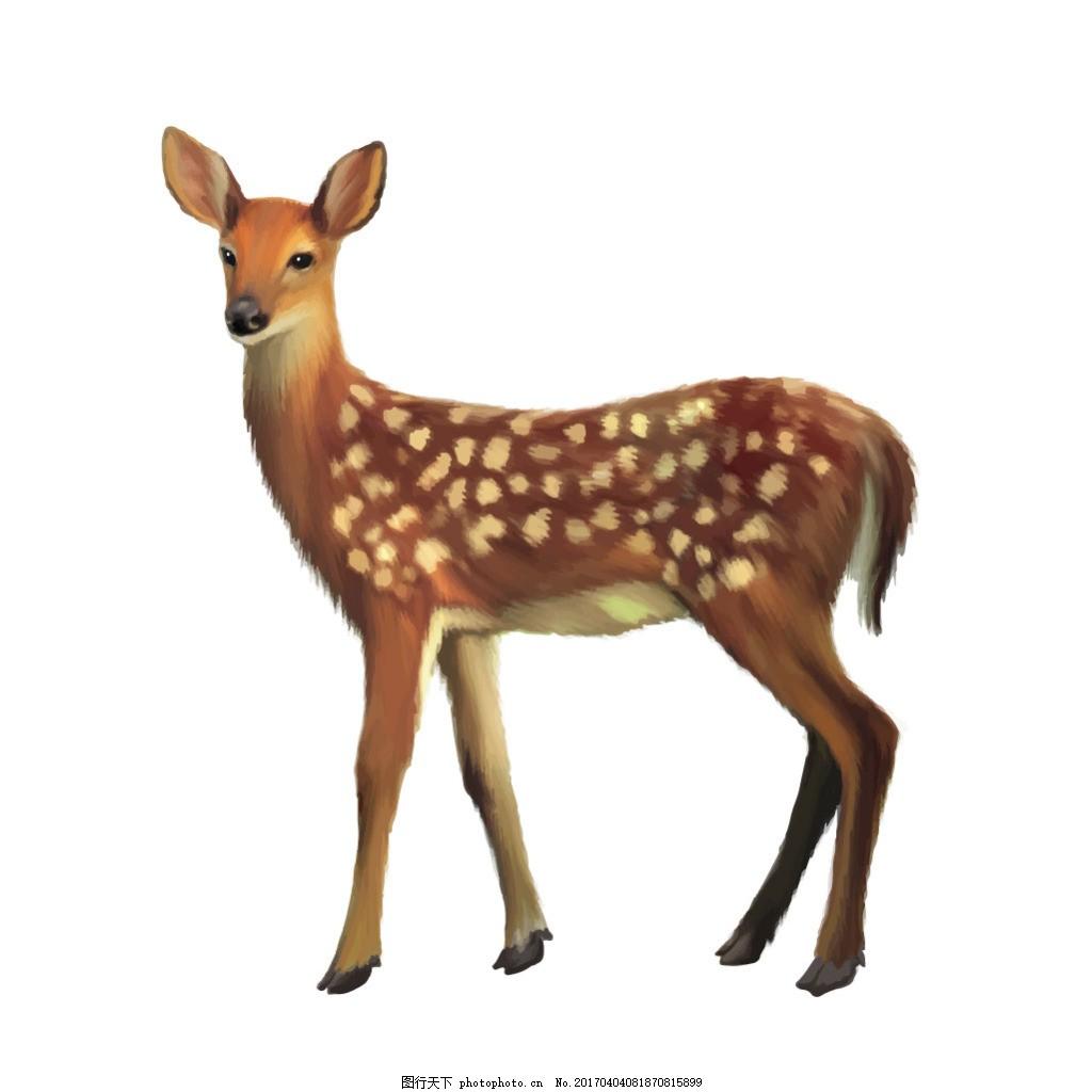矢量写实动物设计素材
