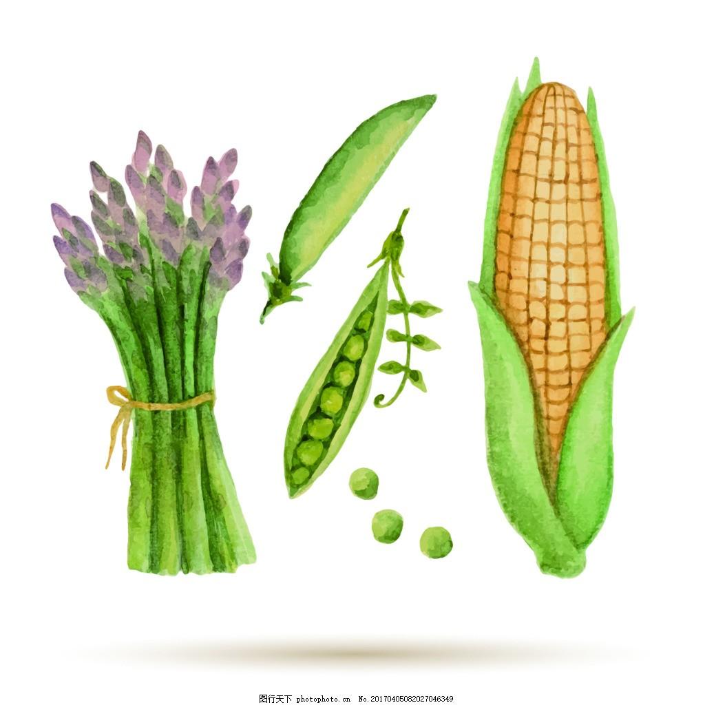 玉米蚕豆素描手绘水果食物矢量图