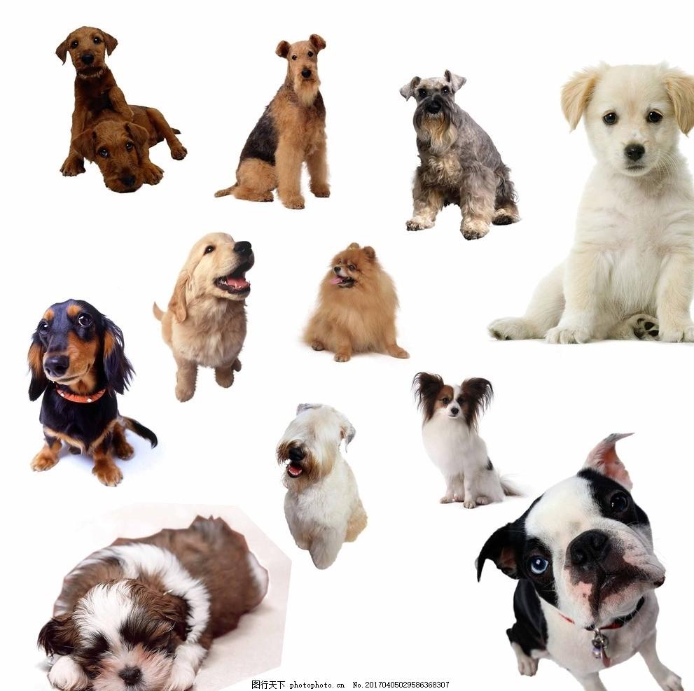 宠物狗 宠物 狗狗 小动物 小狗素材 可爱 可爱小狗 狗 趴着的小狗 站