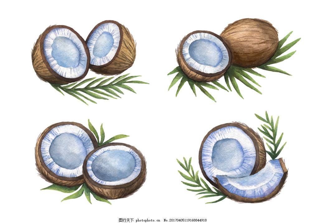 手绘彩铅椰子