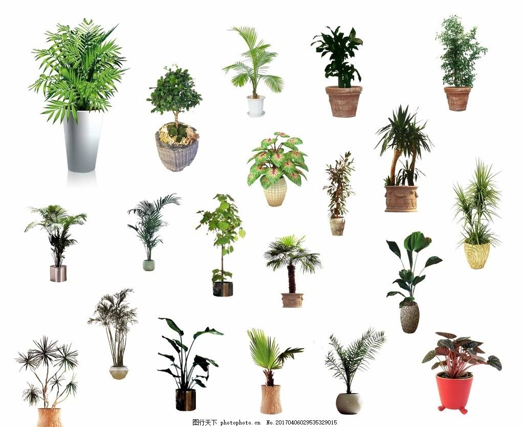 室内室外盆栽 装饰盆栽 室内摆饰 绿色 植物 植物花盆 盆栽素材 盆栽