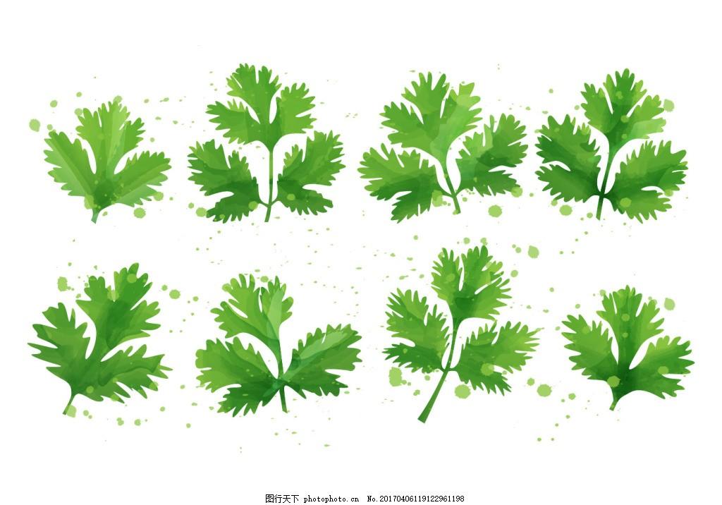 矢量手绘树叶