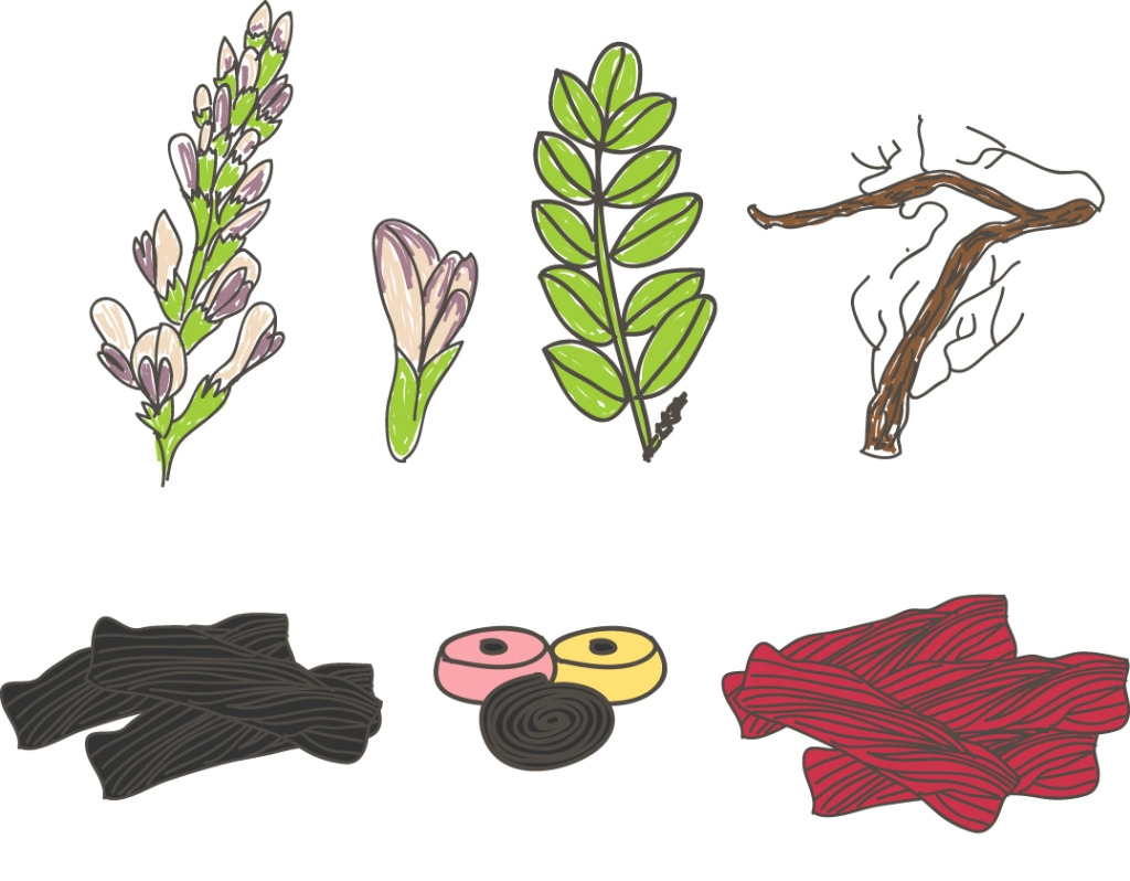 手绘植物花卉树叶
