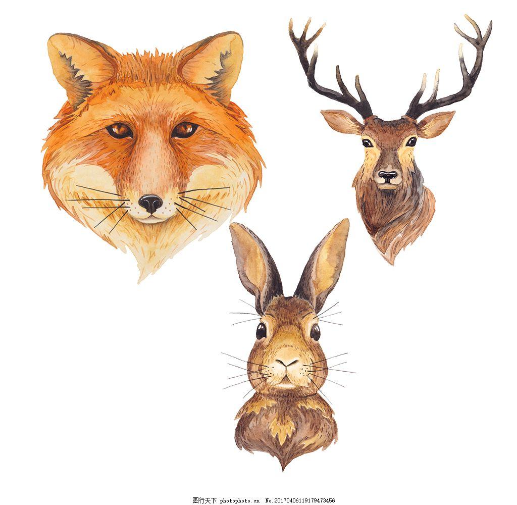 手绘彩铅唯美动物素材 狐狸 秋季 彩铅狐狸 手绘兔子 彩铅兔子