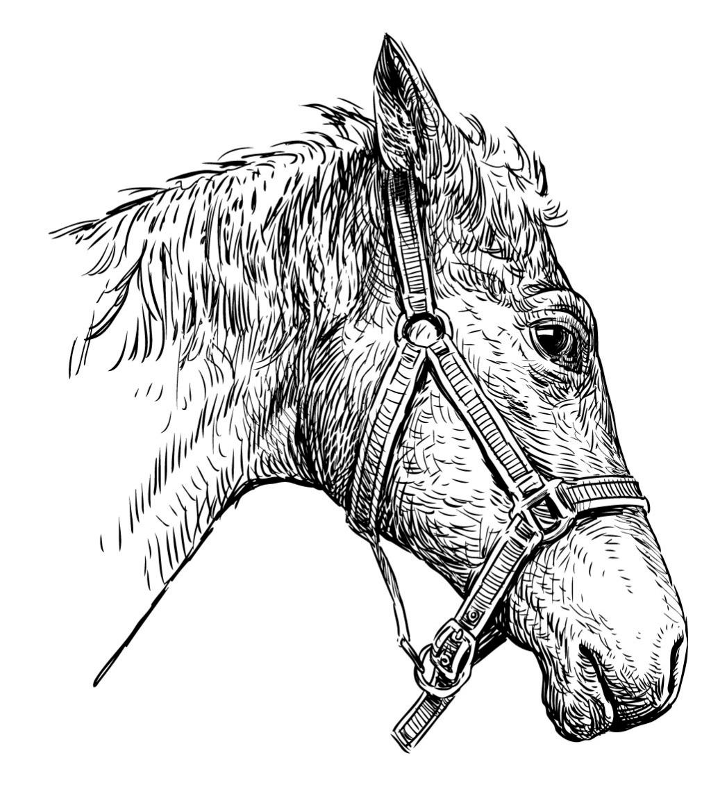 写实手绘马头矢量素材