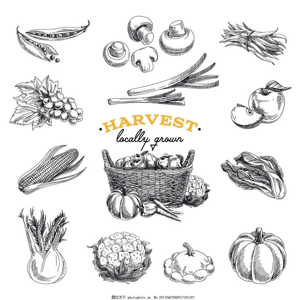 手绘蔬菜素描图片