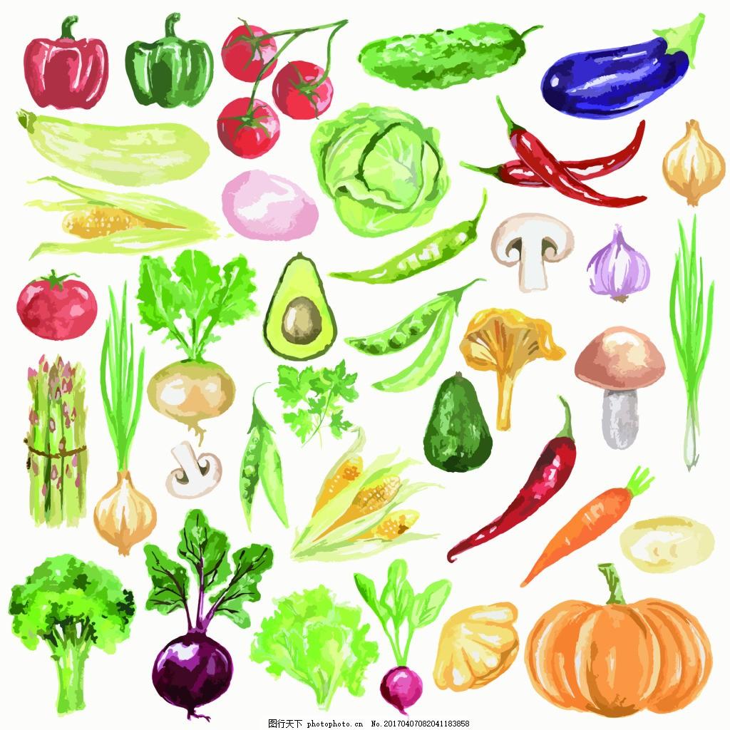蔬菜西红柿花椰菜素描手绘水果 矢量图