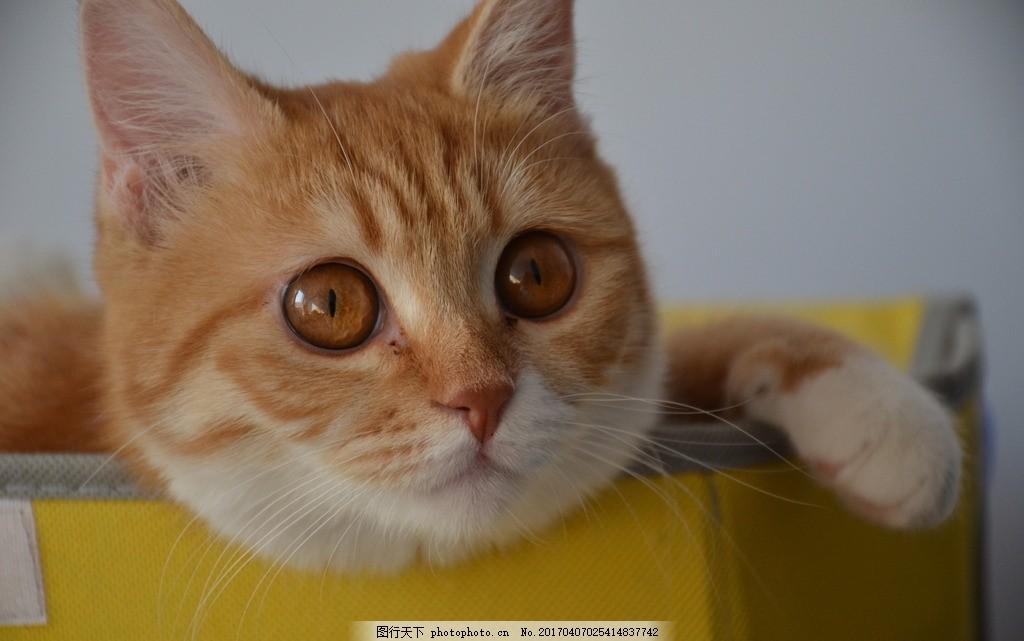 壁纸 动物 猫 猫咪 小猫 桌面 1024_641