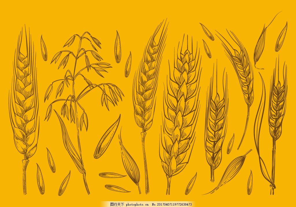 手绘麦子 麦穗 麦穗图标 矢量素材 手绘植物 手绘麦穗 稻田 谷物