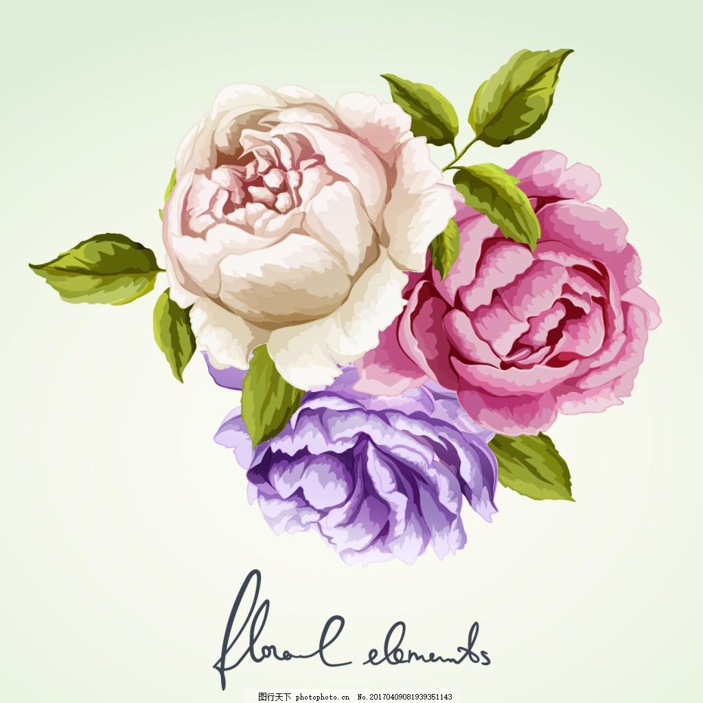 三色水彩玫瑰花 手绘 植物