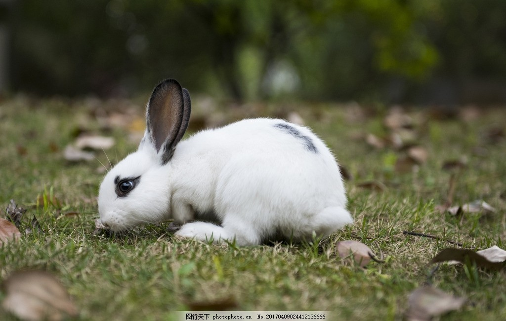 小白兔 精灵 小雪花 宠物 哺乳动物 小可爱 摄影