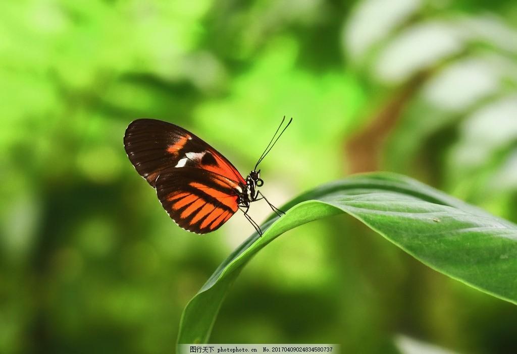 蝴蝶 唯美 可爱 动物 花蝴蝶 摄影