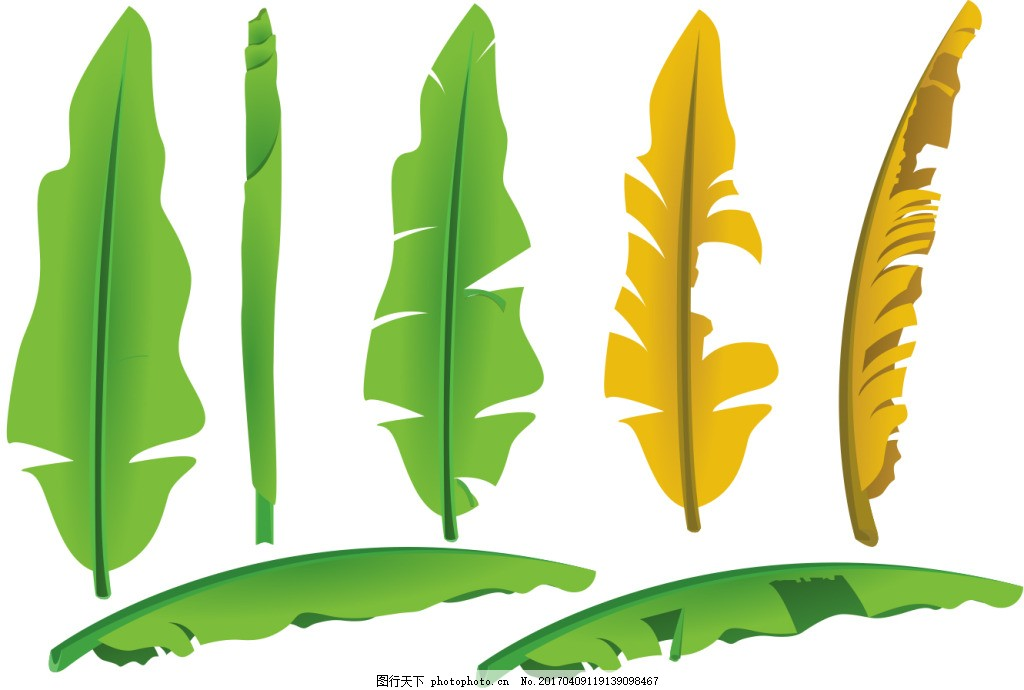 手绘香蕉叶子