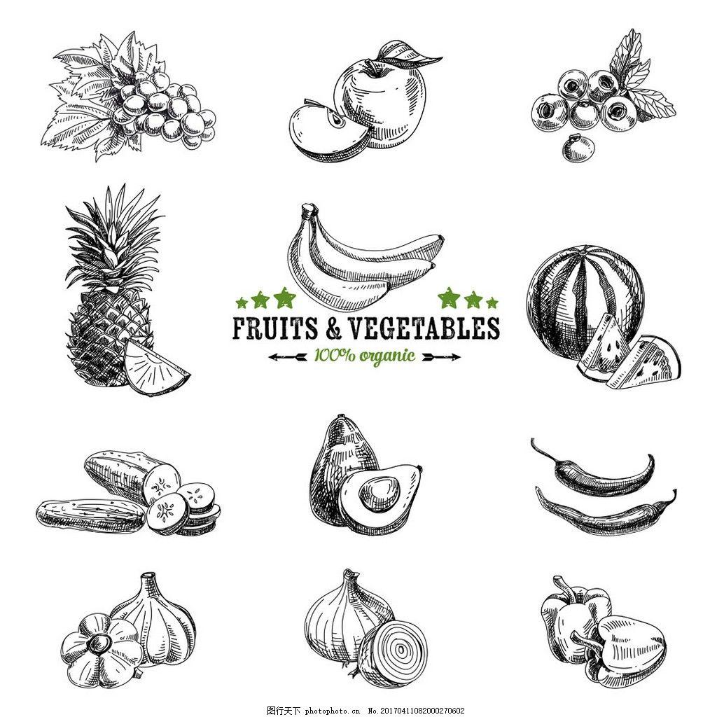 水果蔬菜素描 水果插画 菠萝 大蒜 香蕉 西瓜 蓝莓 苹果 美食素描图片
