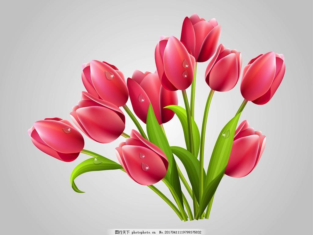 手绘郁金香矢量素材 唯美 手绘花朵 花卉花朵 手绘花卉 手绘植物