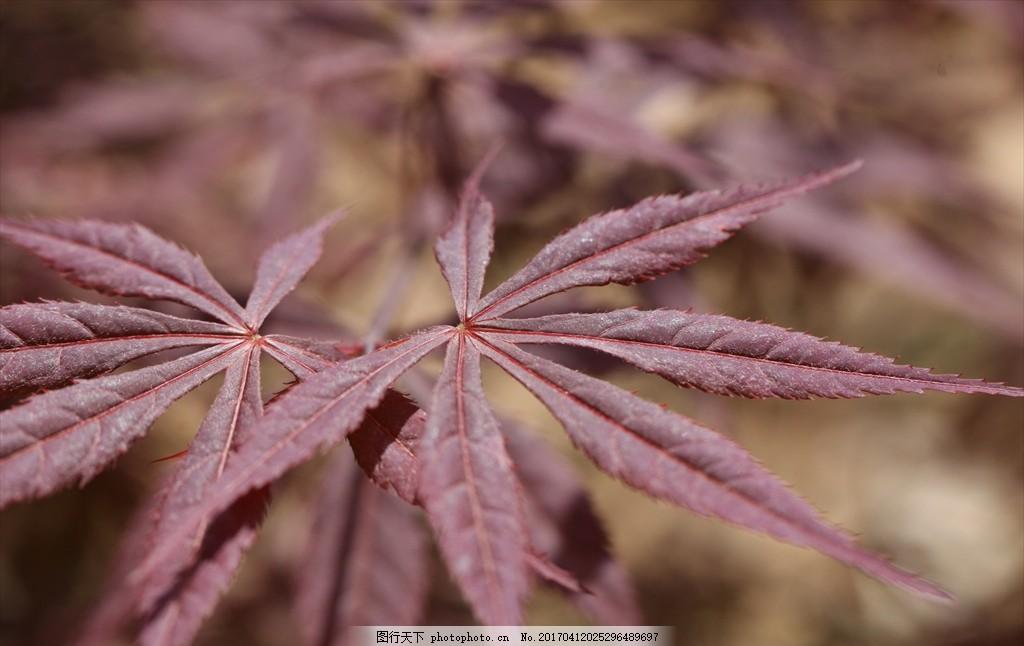 微观植物 植物 红色 景观 自然 微观 摄影 生物世界 树木树叶 72dpi j