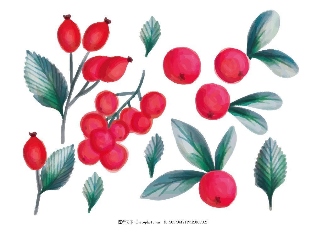 手绘彩铅唯美果实植物素材 手绘水果 手绘植物 矢量素材 水果 扁平化