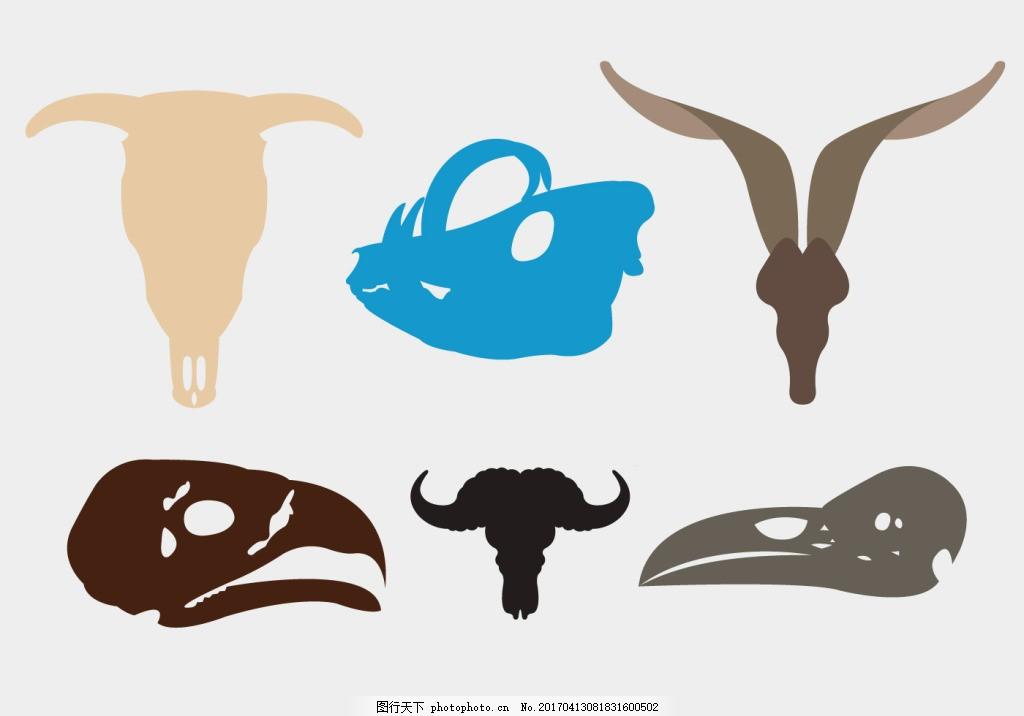 野生动物头骨素材