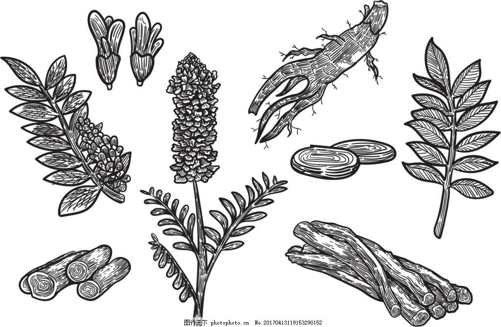手绘线性甘草植物