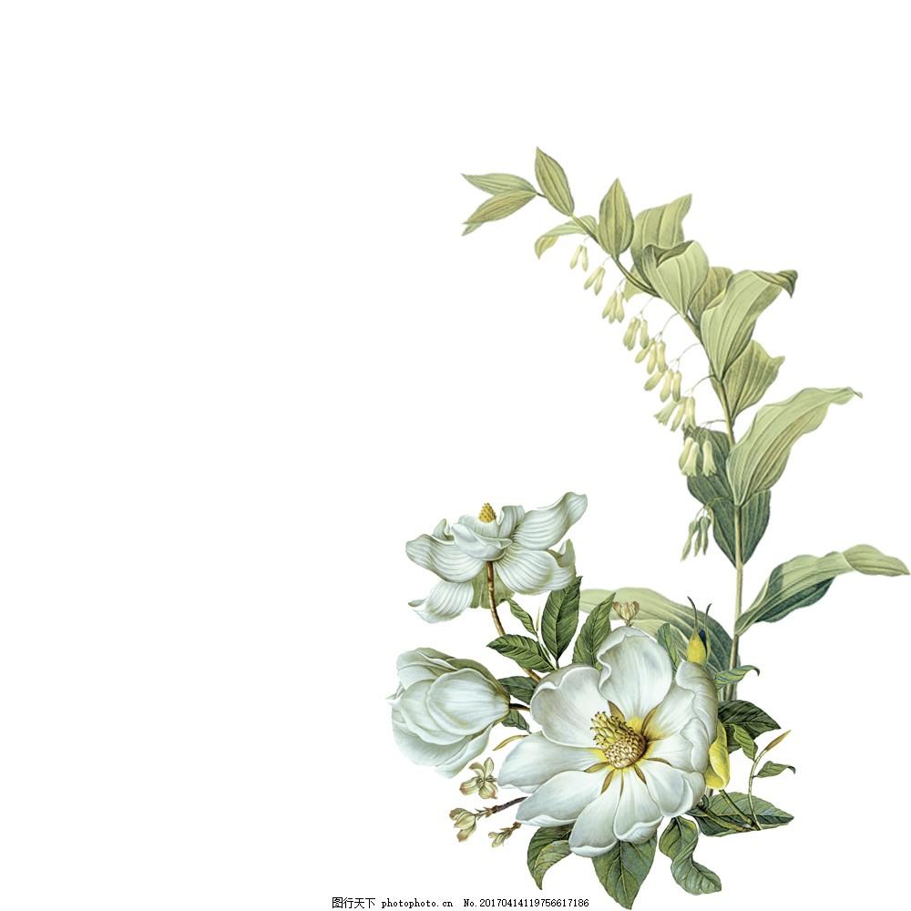 手绘白色花朵叶子