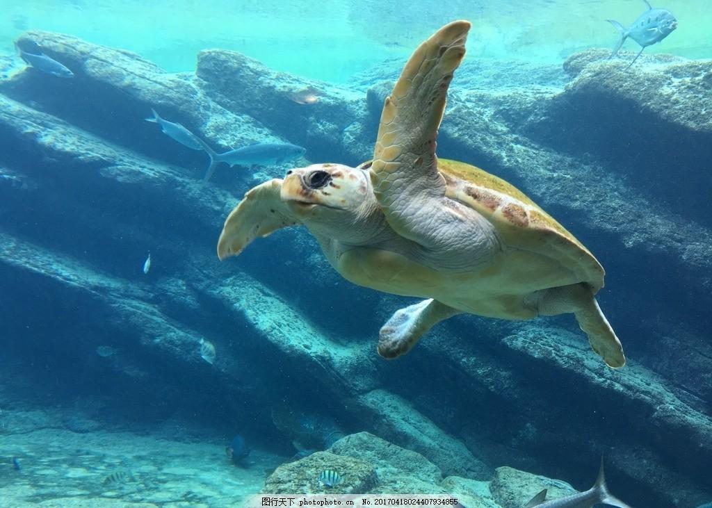 海龟 水族馆 海洋动物 爬行动物 分享 摄影