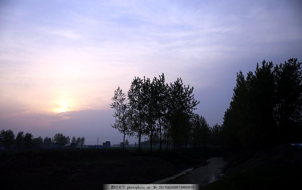夕阳下的树林 夕阳树林 桥头树木 杨树林 河边树林 风景树木 春天杨树