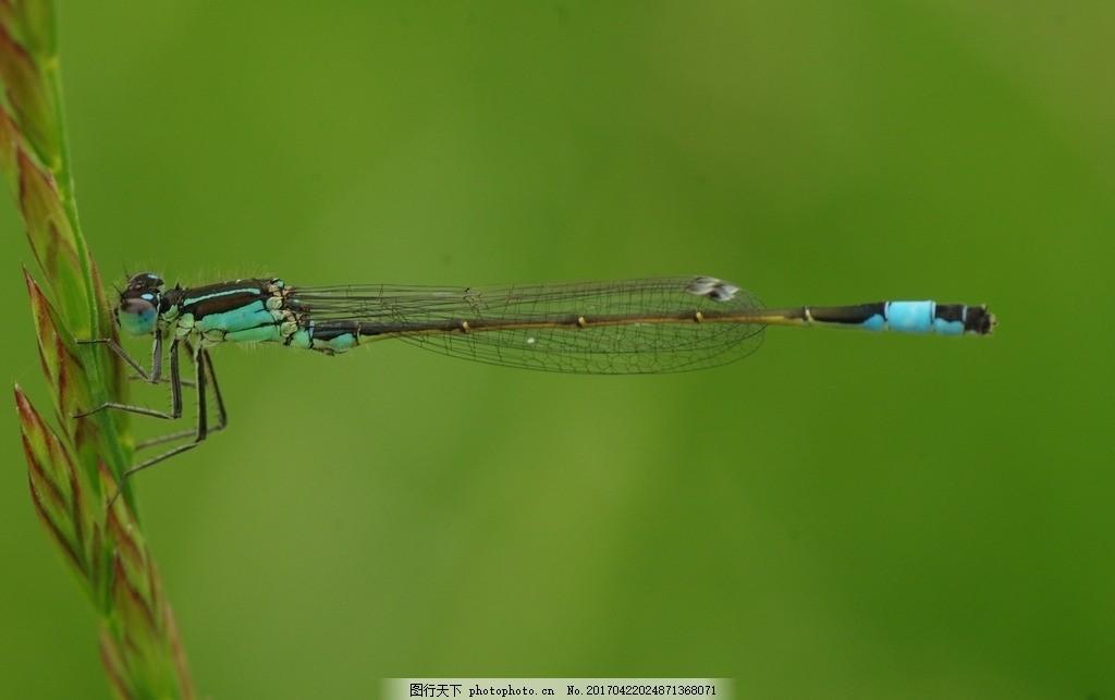 蜻蜓 翅 动物 节肢动物 特写 动物摄影 分享