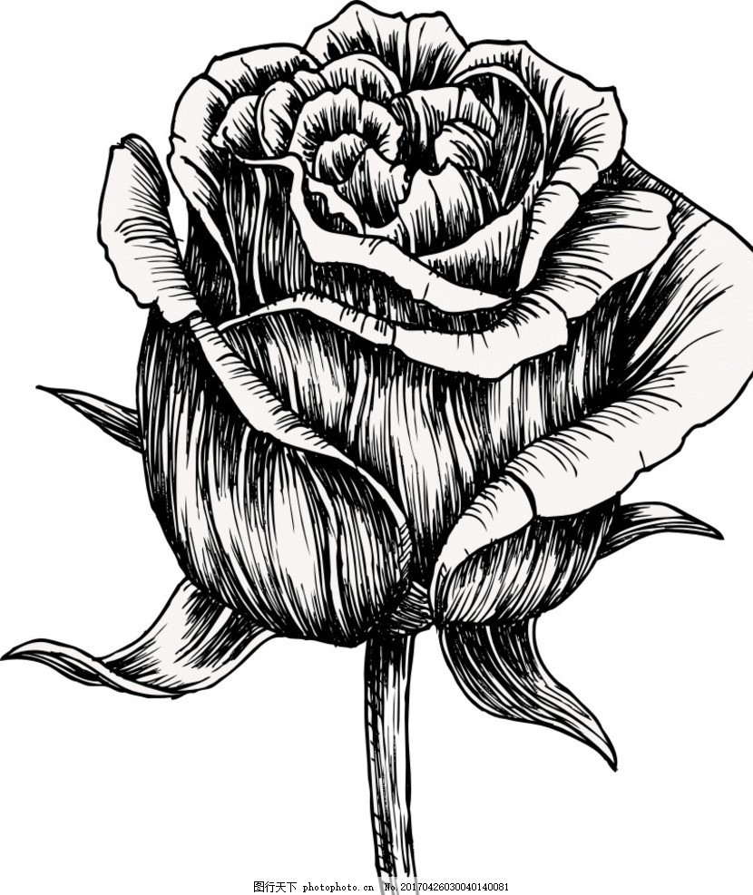 手绘玫瑰 手绘花朵 植物 黑白花朵 黑白玫瑰 复古玫瑰 花朵背景