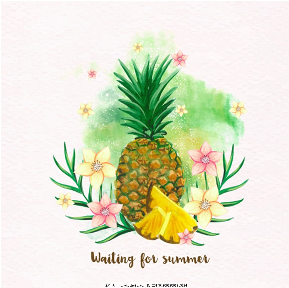 手绘水彩菠萝插图