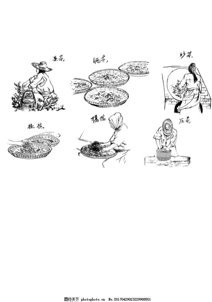 采茶手绘 茶叶 素描 钢笔画