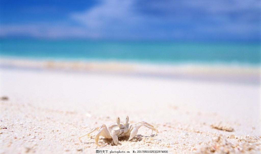 快乐的小螃蟹 壁纸 海滩 沙滩 特写 爬行 眼睛 宏源图库 摄影