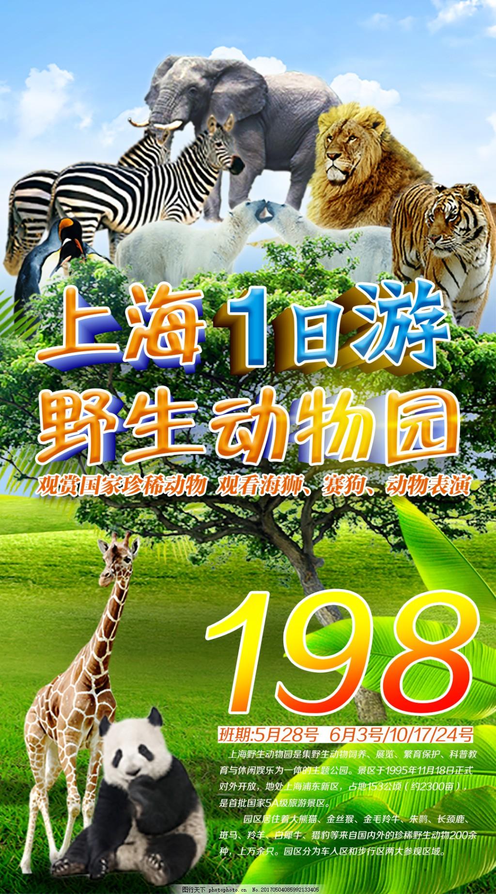 老虎 熊猫 长颈鹿 狮子 大象 斑马 野生动物园 珍稀动物 动物集