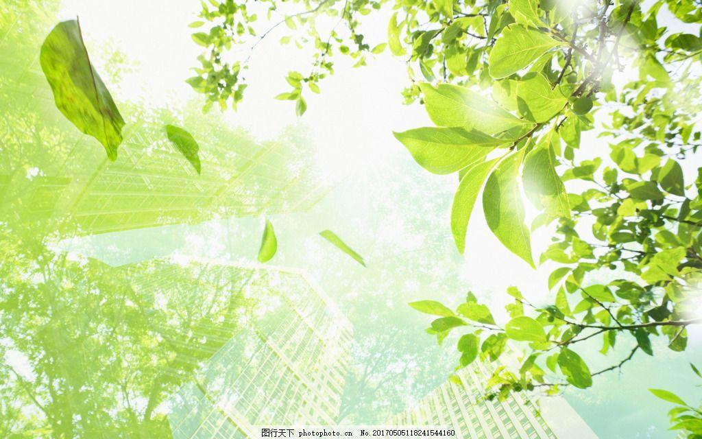 清新阳光绿色背景 大树 树叶 郊外 森林