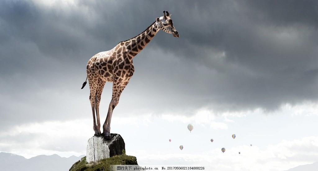 长颈鹿 唯美 炫酷 立体 动物 野生