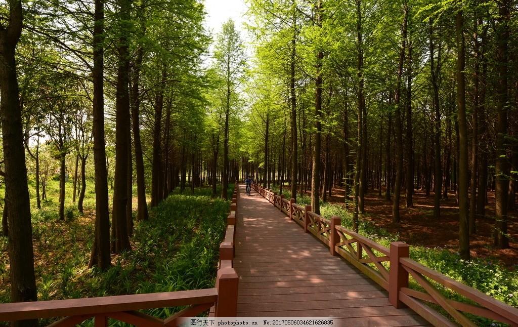 公园生态步道 林荫步道 景观设计 林荫小道 森林步道 摄影