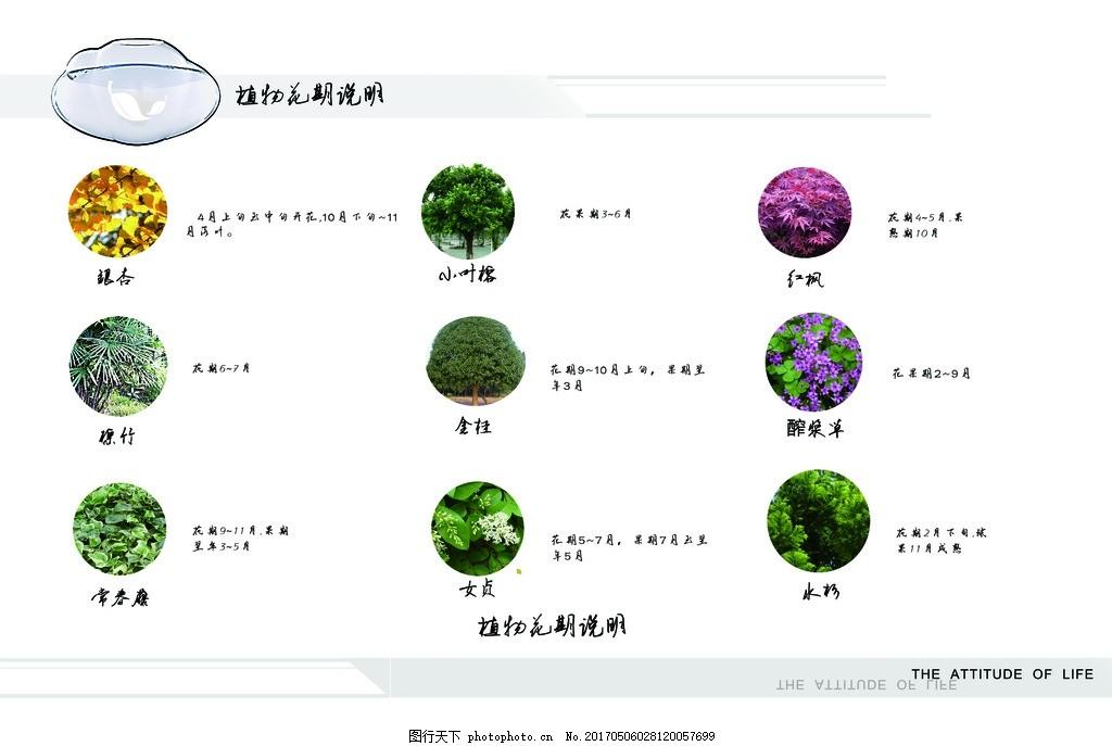 景观设计植物说明图 景观设计 植物 花期说明 设计分析 分析排版图