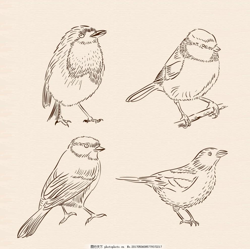 粗略鸟包 自然 动物 绘制 翅膀 羽毛 丛林 绘画 动物园 手工