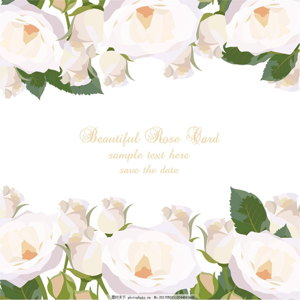 手绘白玫瑰花边背景