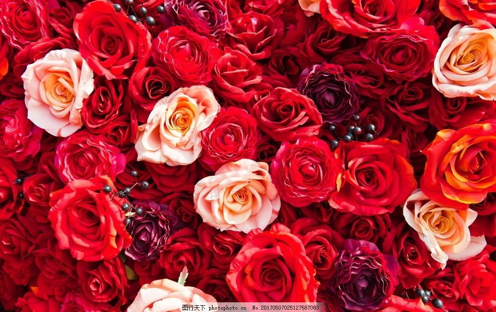 玫瑰壁纸桌面_玫瑰 壁纸