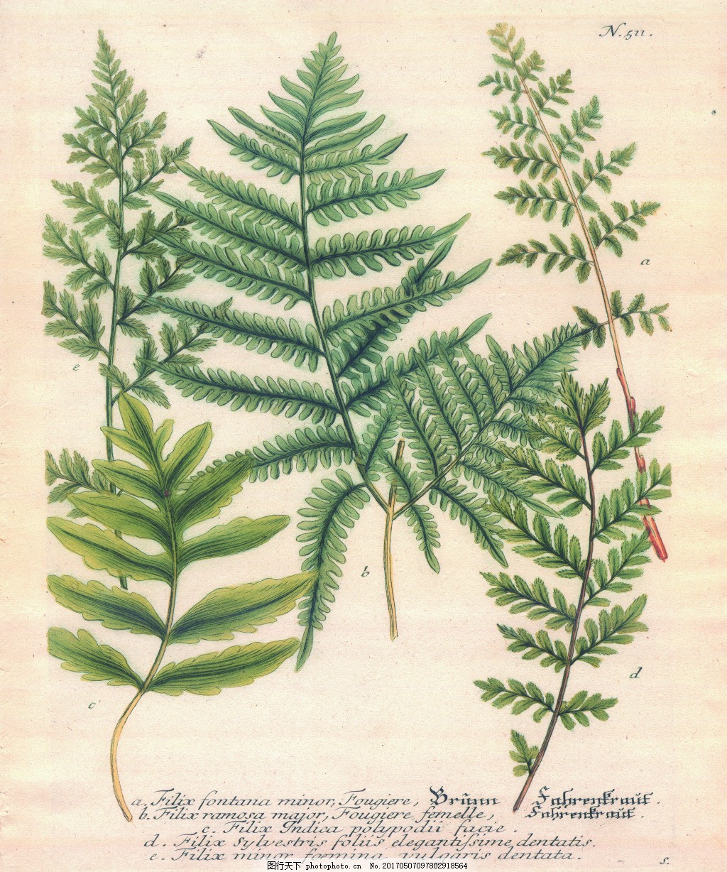 植物标本树叶画