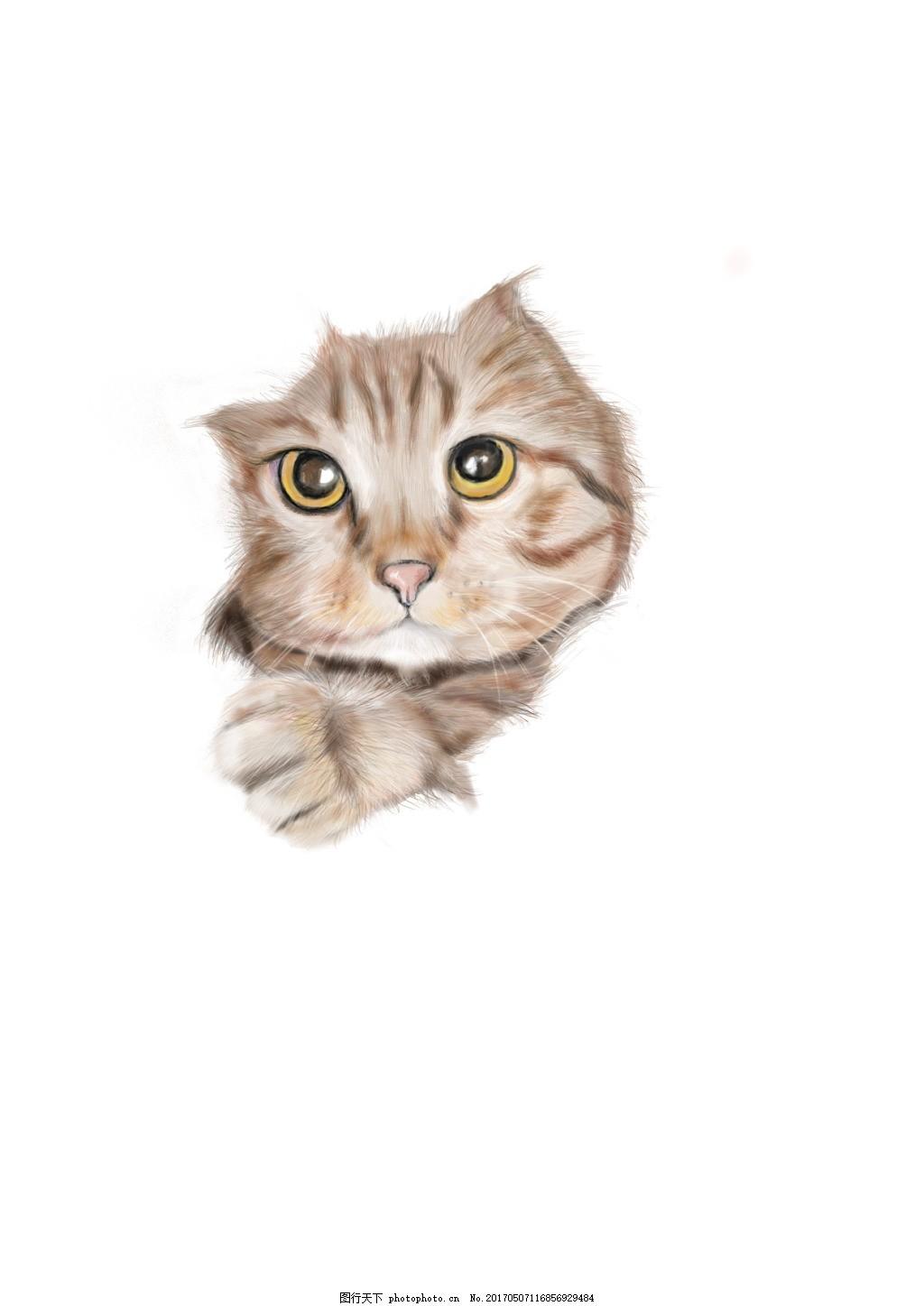 手绘猫咪 铅笔 彩铅