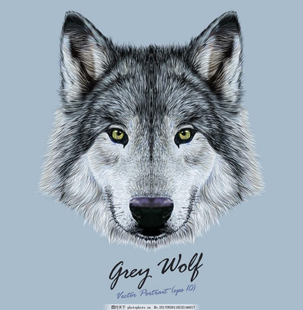 动物头像狼背景图