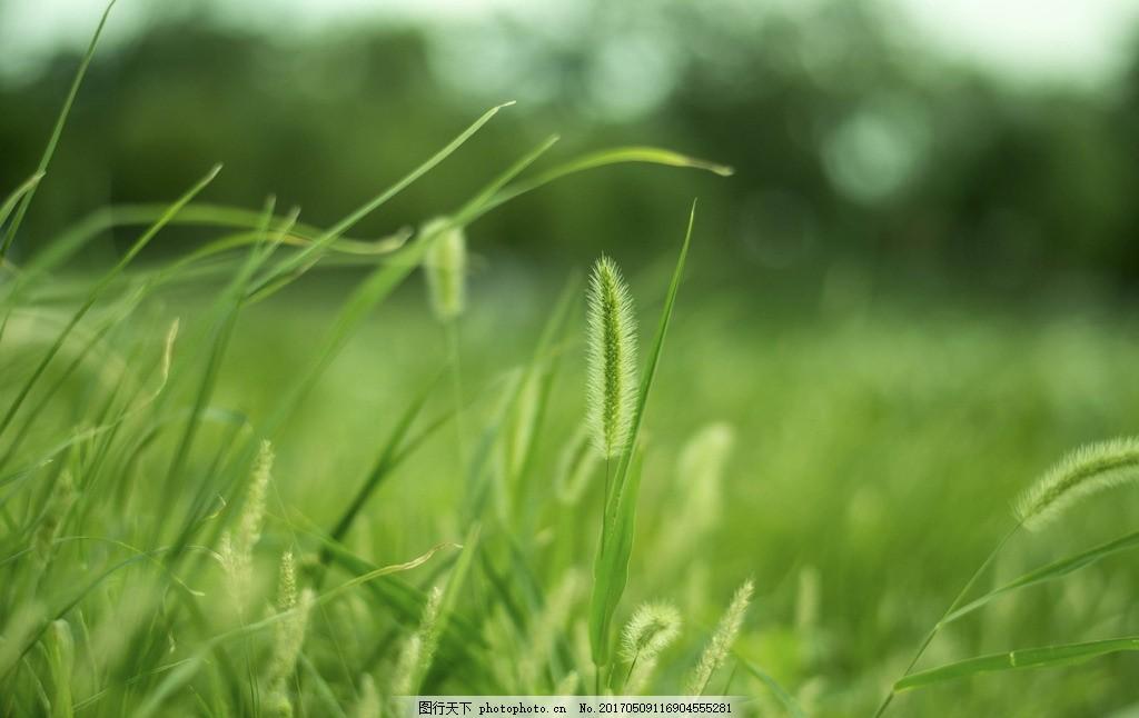 阳光照大地绿草寸寸长的动物