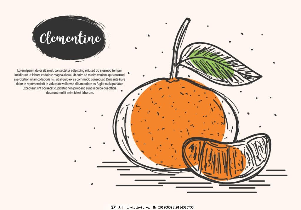 手绘水果橙子插画