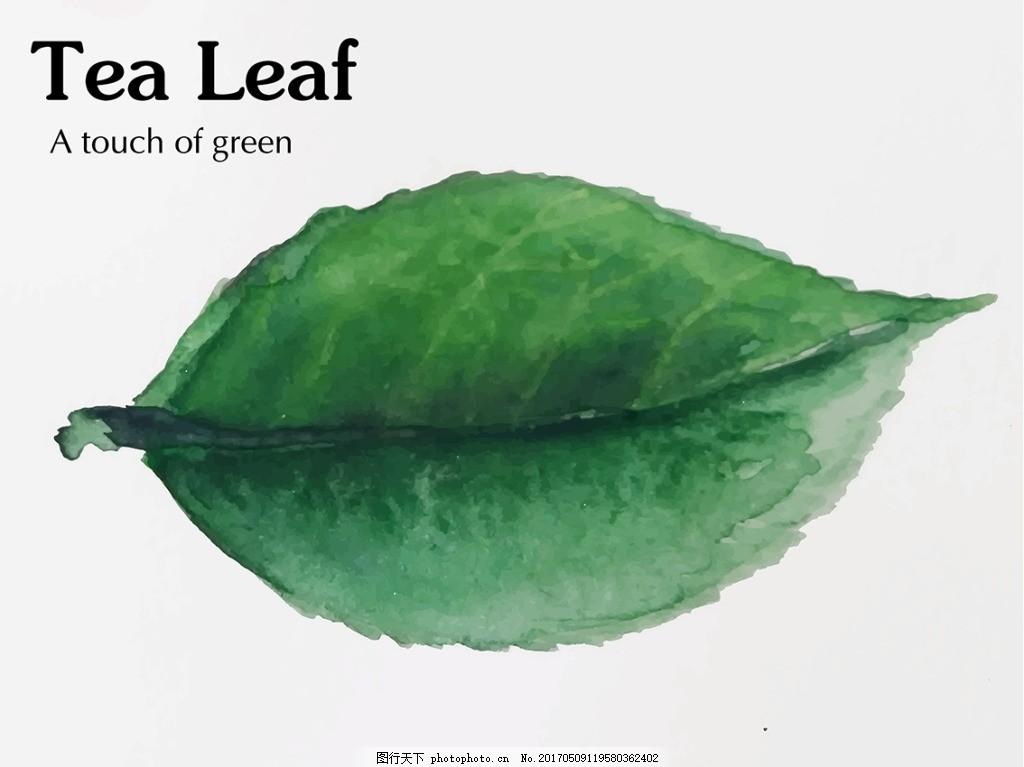 手绘水彩绿色茶叶叶子