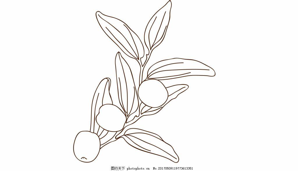 红枣手绘线稿图