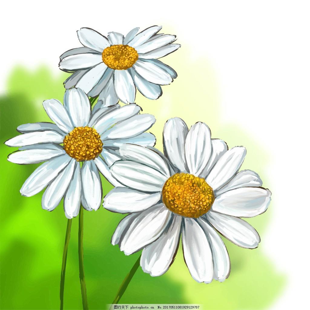 手绘白色雏菊 植物 唯美