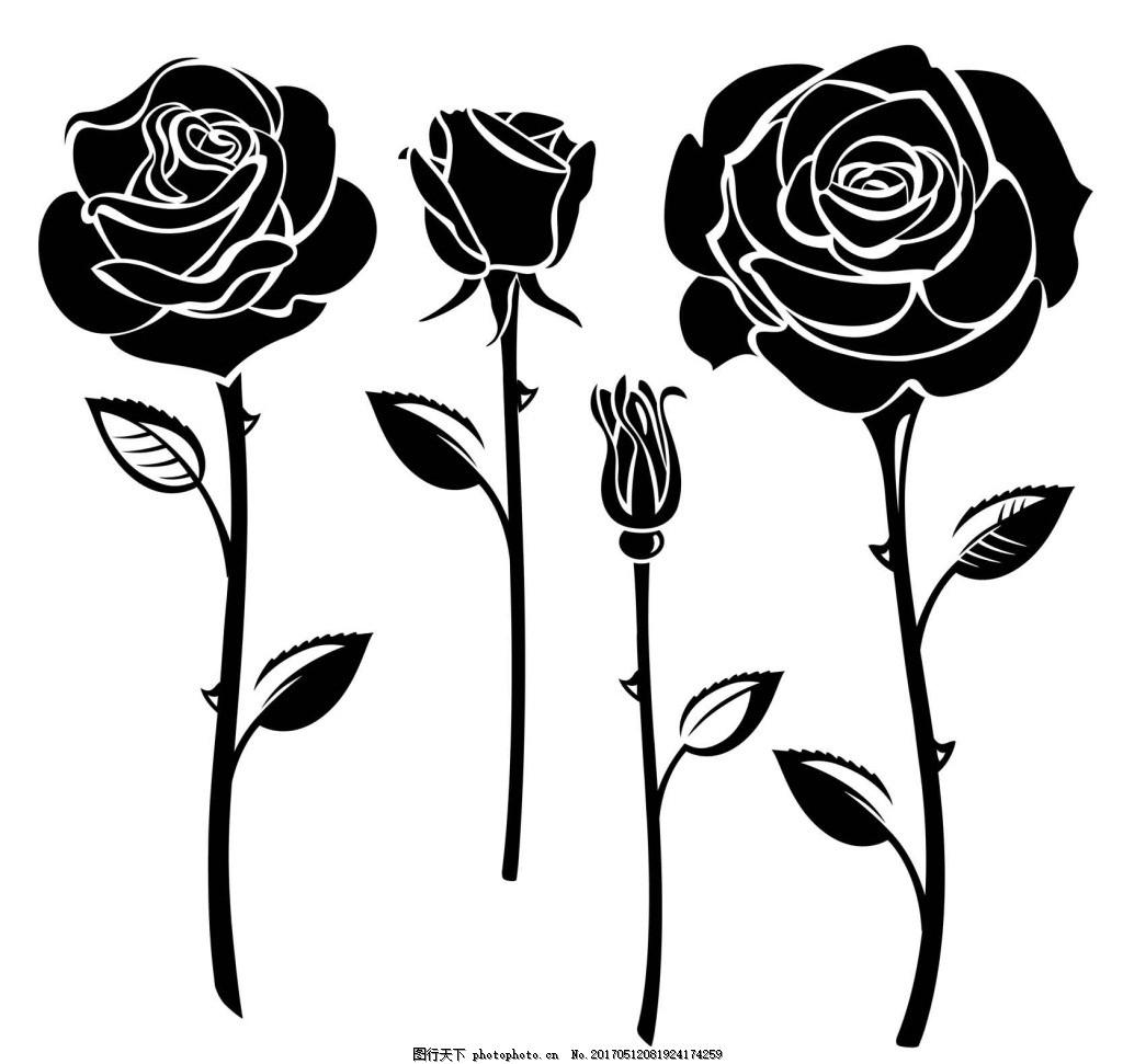 黑白玫瑰花 手绘 植物