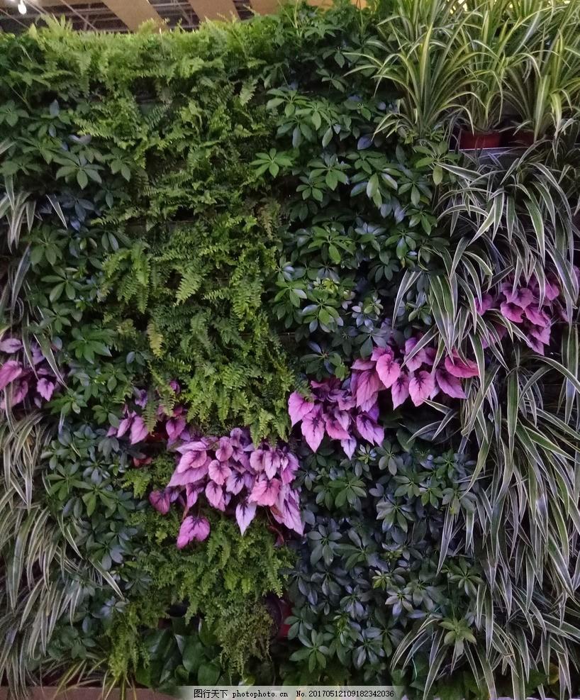 绿植墙 绿色墙 围挡 绿植 藤萝 植物墙 摄影 生物世界 花草 72dpi jpg